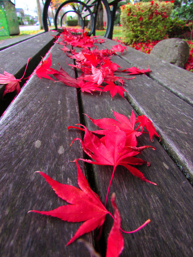 Autumn Leaves In Vancouver