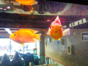 Mandarin at Yonge & Eglinton for Mom's Birthday